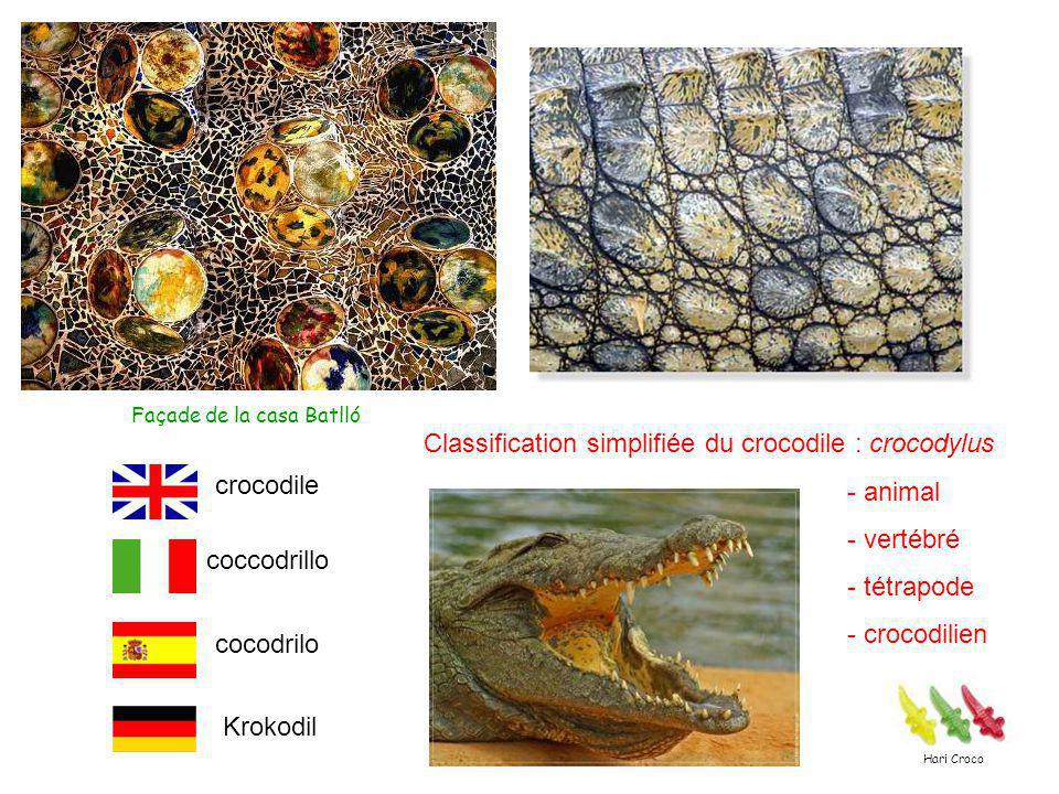 Classification simplifiée du crocodile : crocodylus - animal