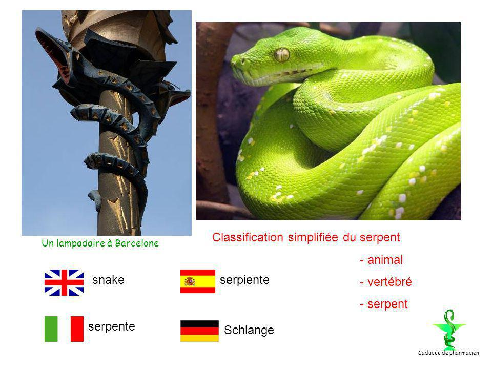 Classification simplifiée du serpent - animal - vertébré - serpent