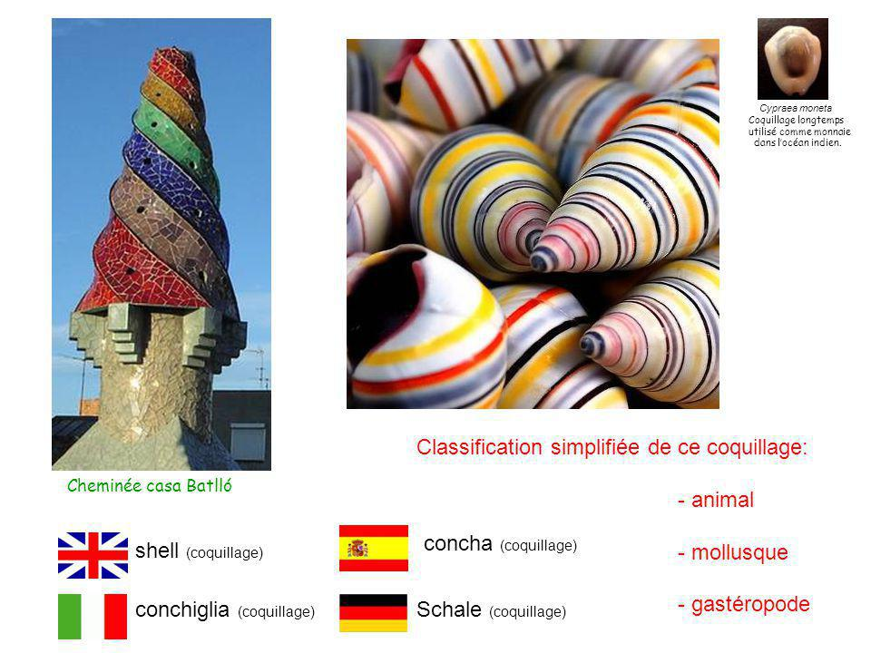 Classification simplifiée de ce coquillage: - animal - mollusque