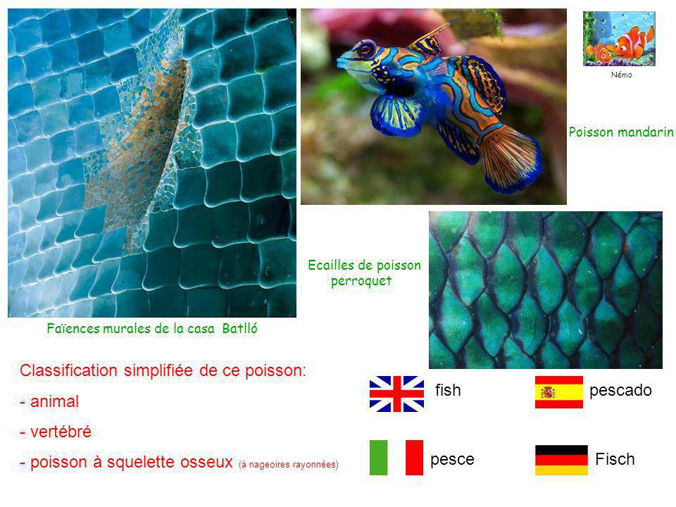 Classification simplifiée de ce poisson: - animal - vertébré