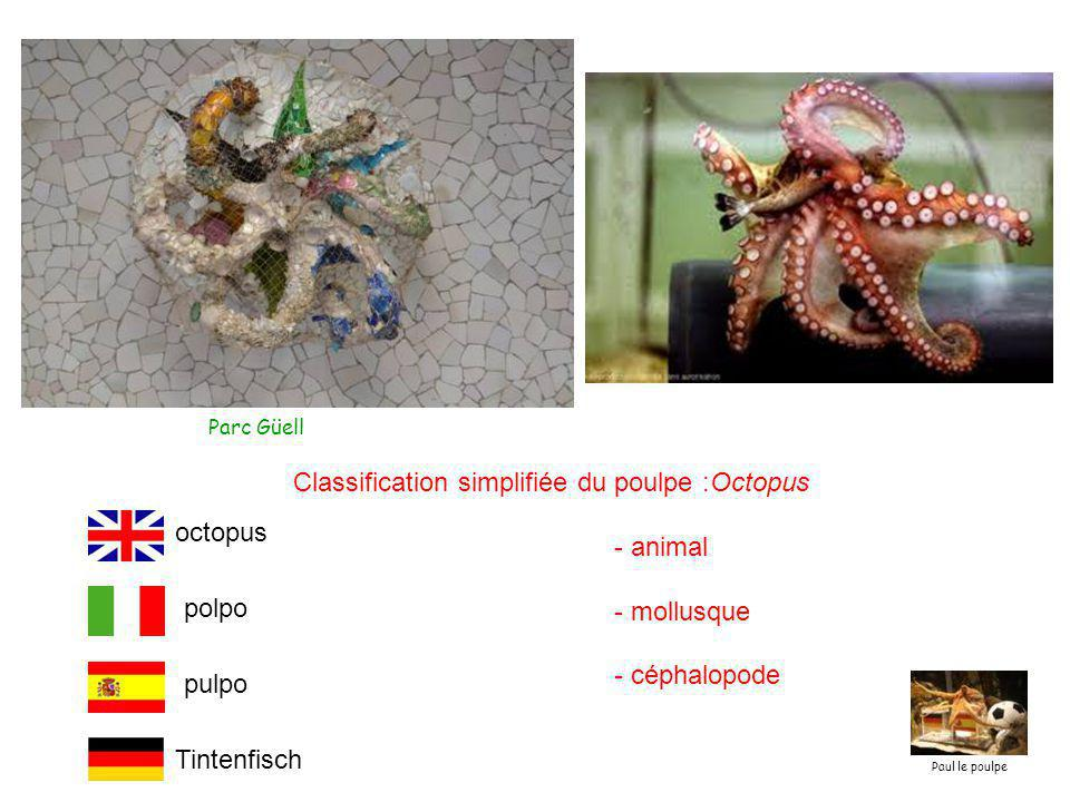 Classification simplifiée du poulpe :Octopus - animal - mollusque