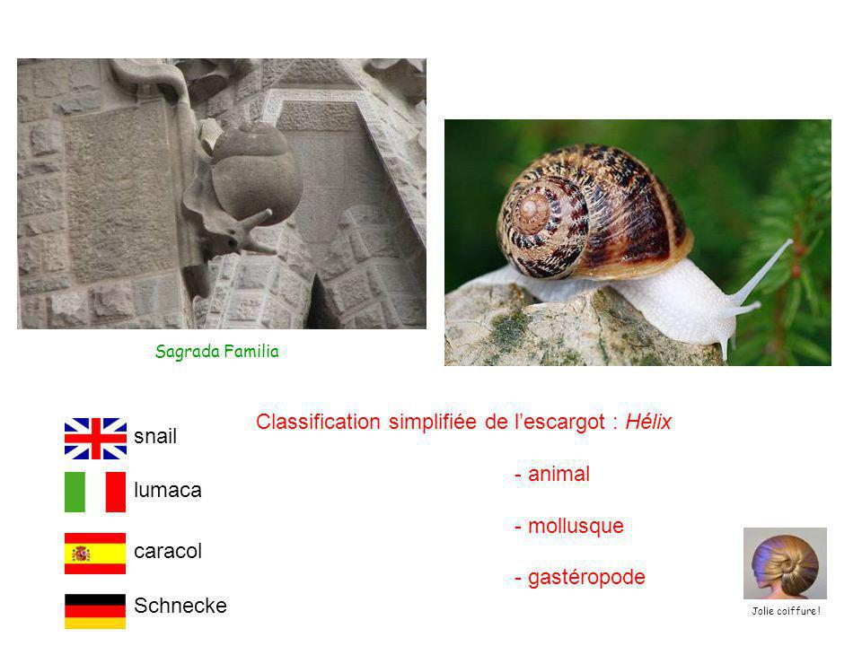 Classification simplifiée de l'escargot : Hélix - animal - mollusque