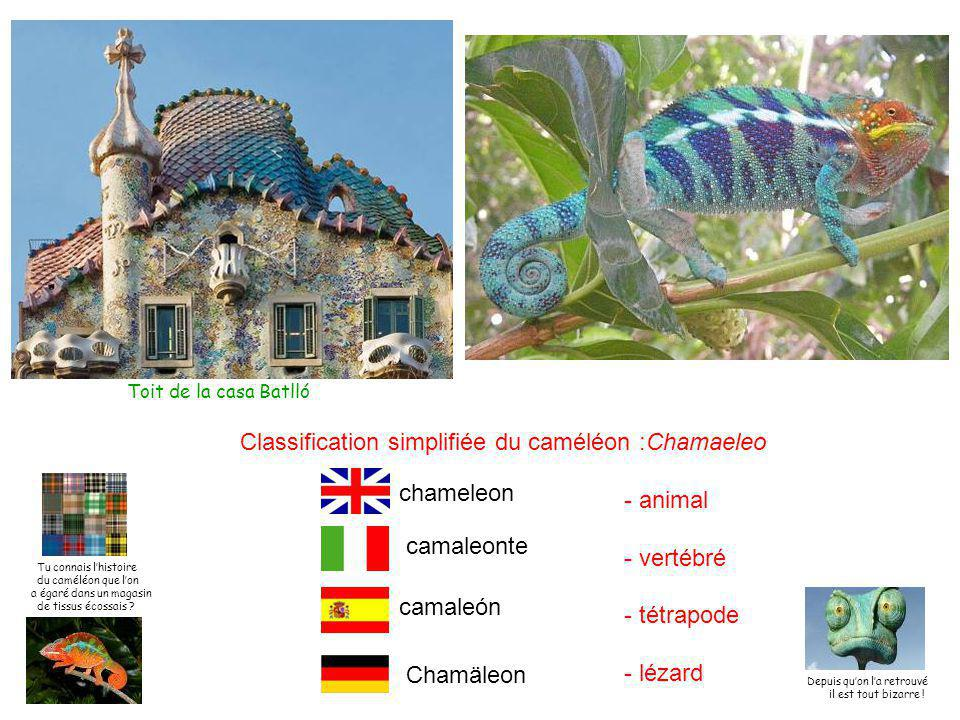 Classification simplifiée du caméléon :Chamaeleo - animal - vertébré