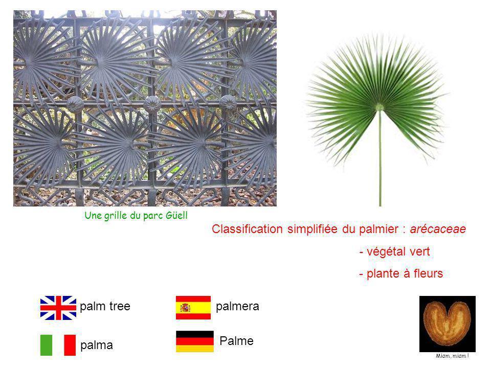 Classification simplifiée du palmier : arécaceae - végétal vert
