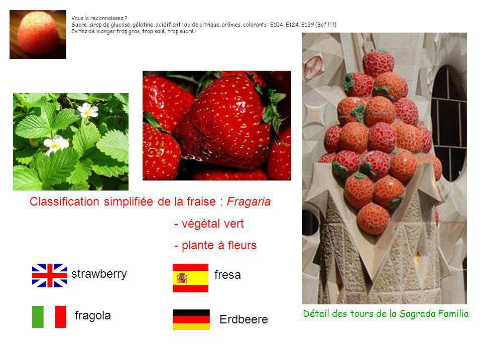 Classification simplifiée de la fraise : Fragaria - végétal vert
