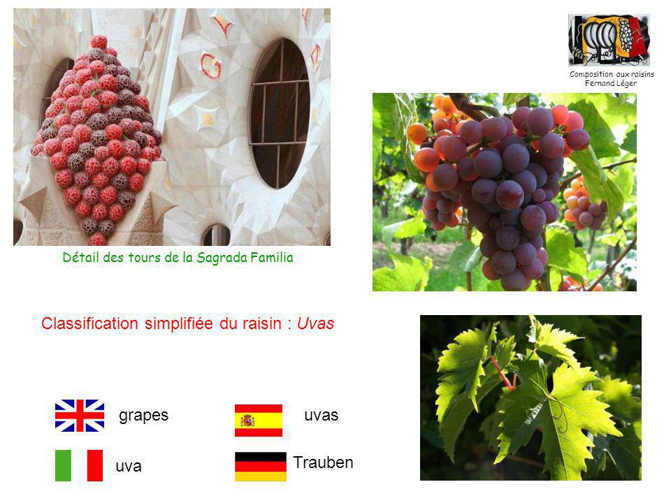 Classification simplifiée du raisin : Uvas