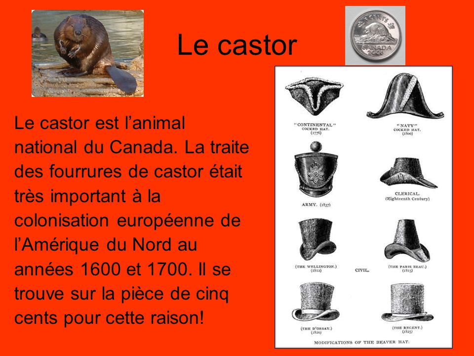 Le castor Le castor est l'animal national du Canada. La traite