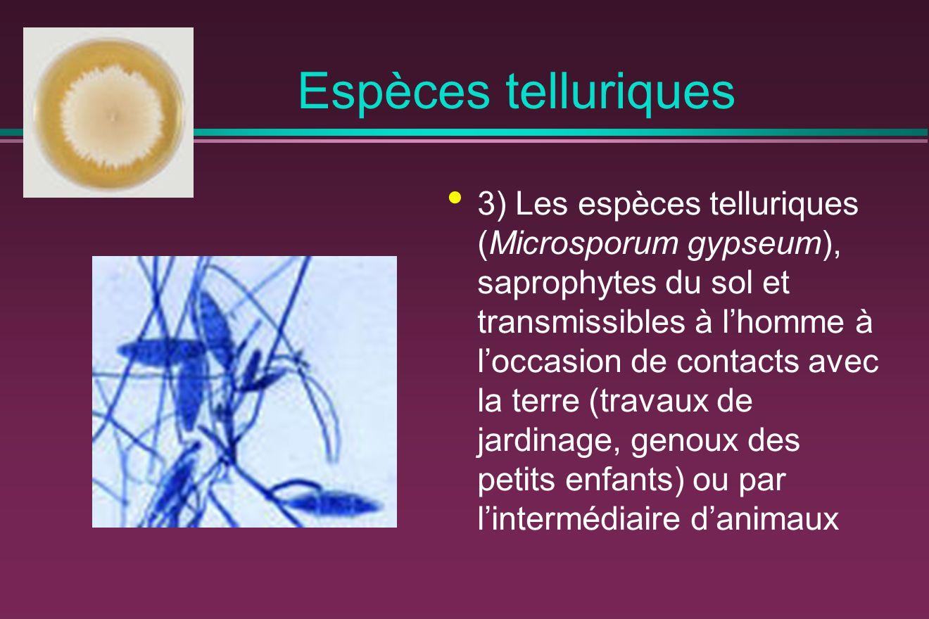 Espèces telluriques