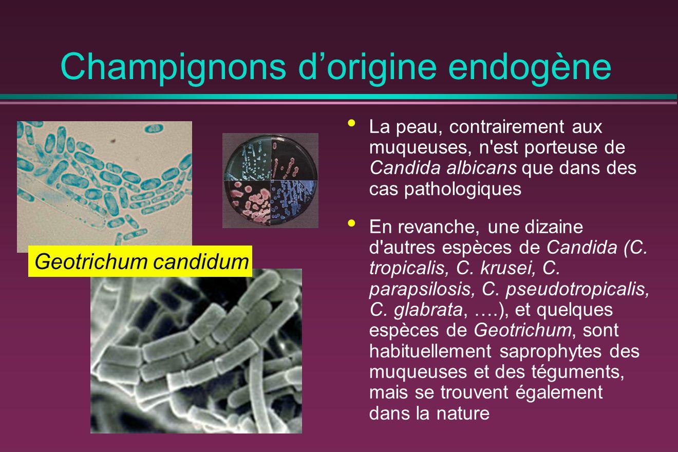 Champignons d'origine endogène