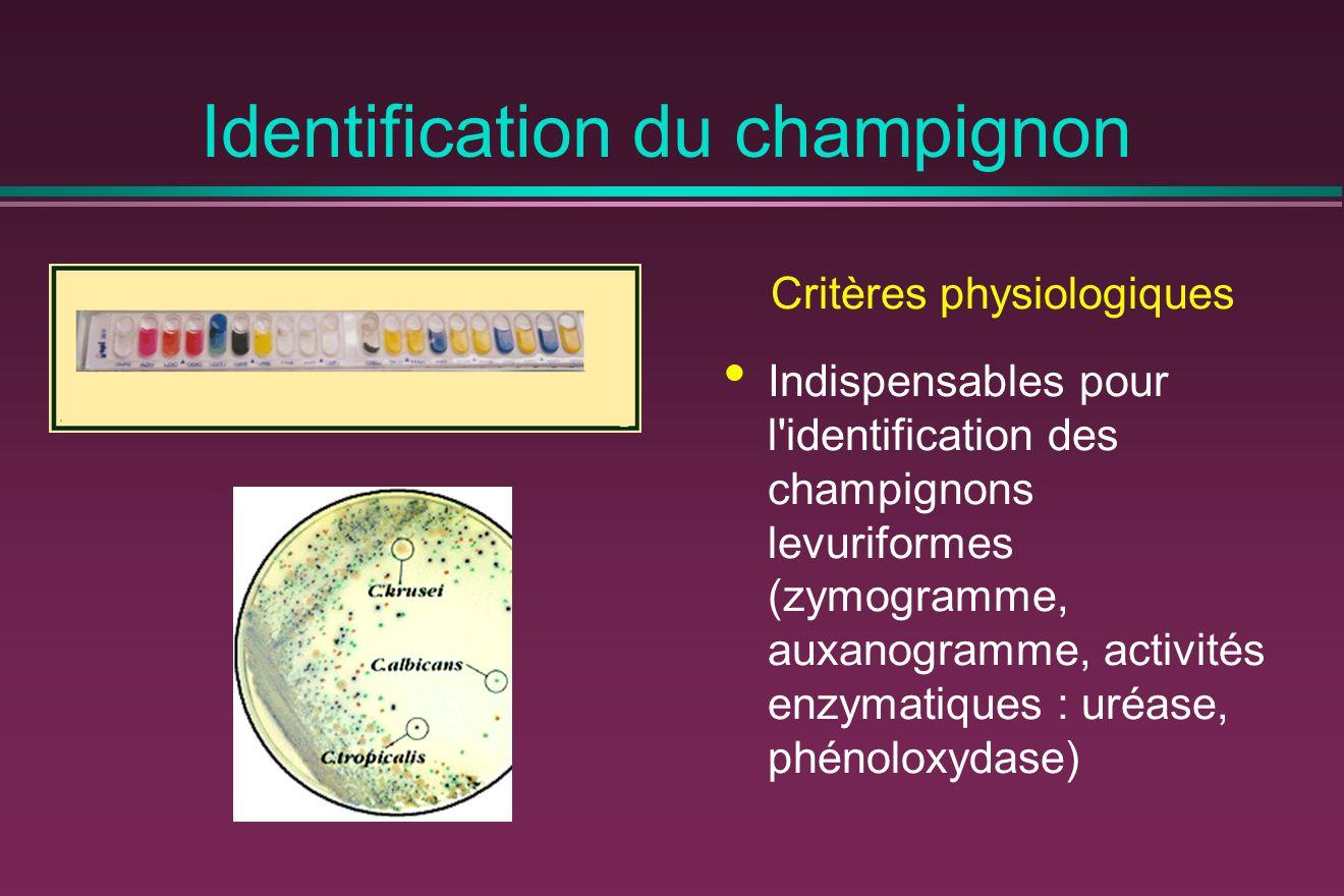 Identification du champignon