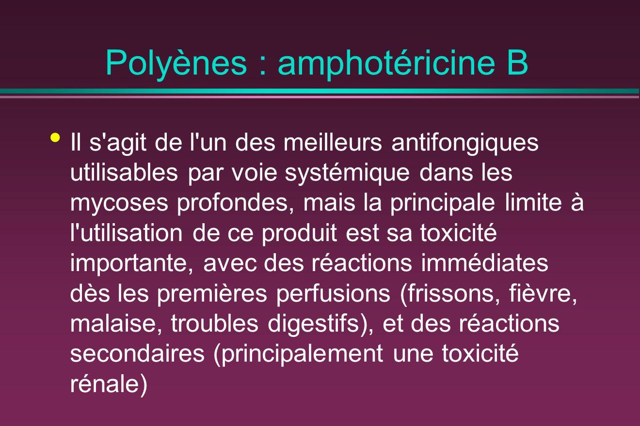 Polyènes : amphotéricine B