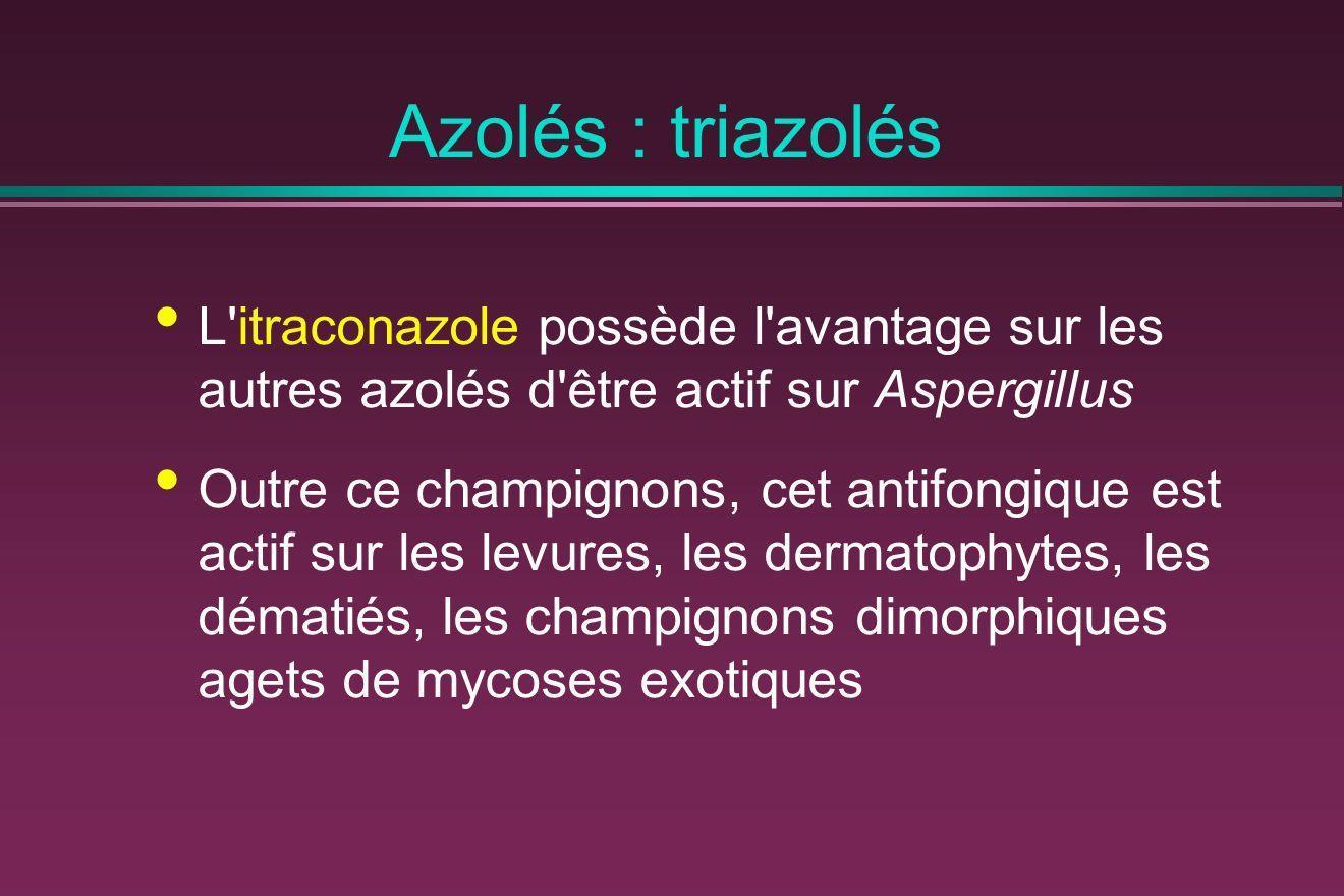 Azolés : triazolés L itraconazole possède l avantage sur les autres azolés d être actif sur Aspergillus.