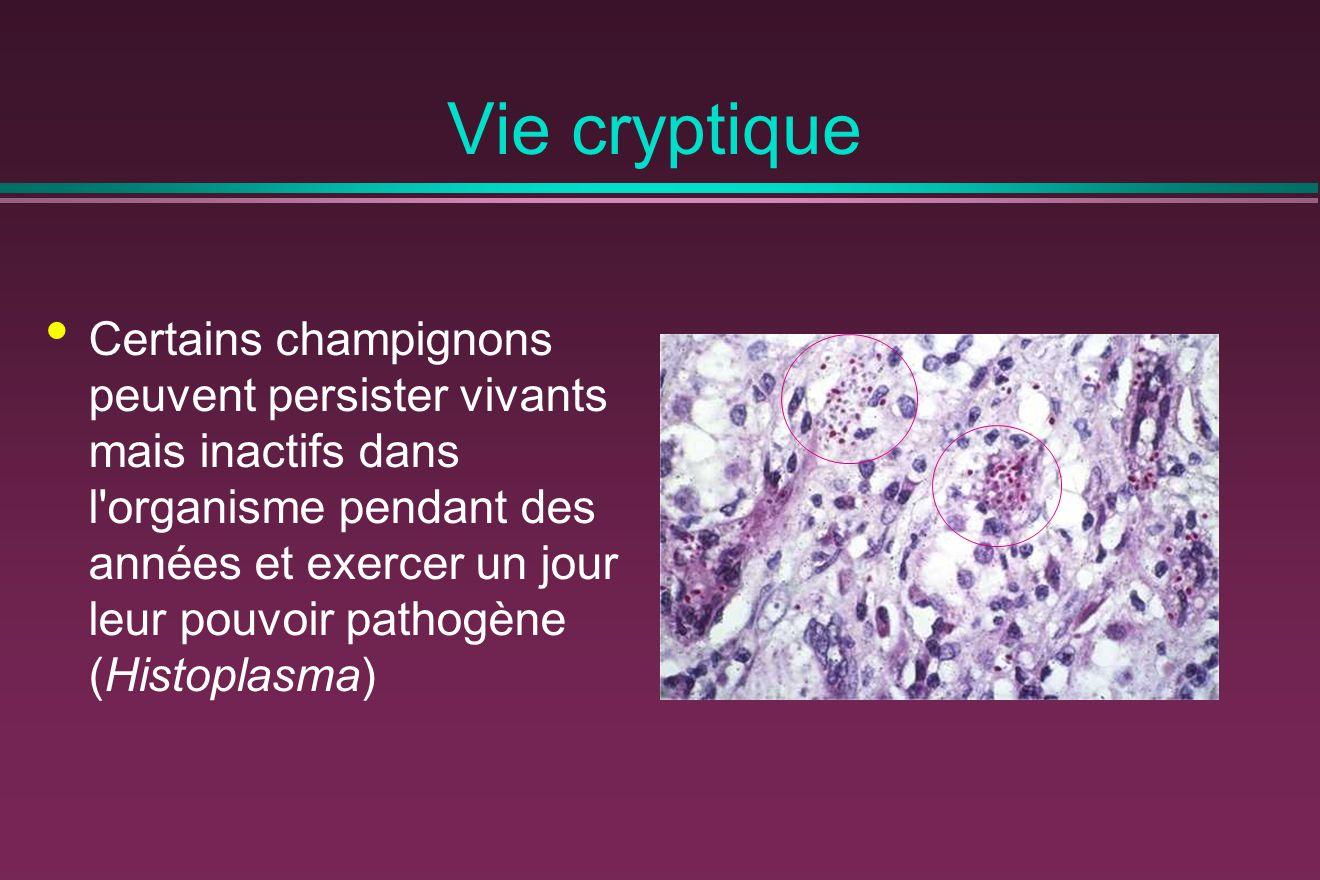Vie cryptique
