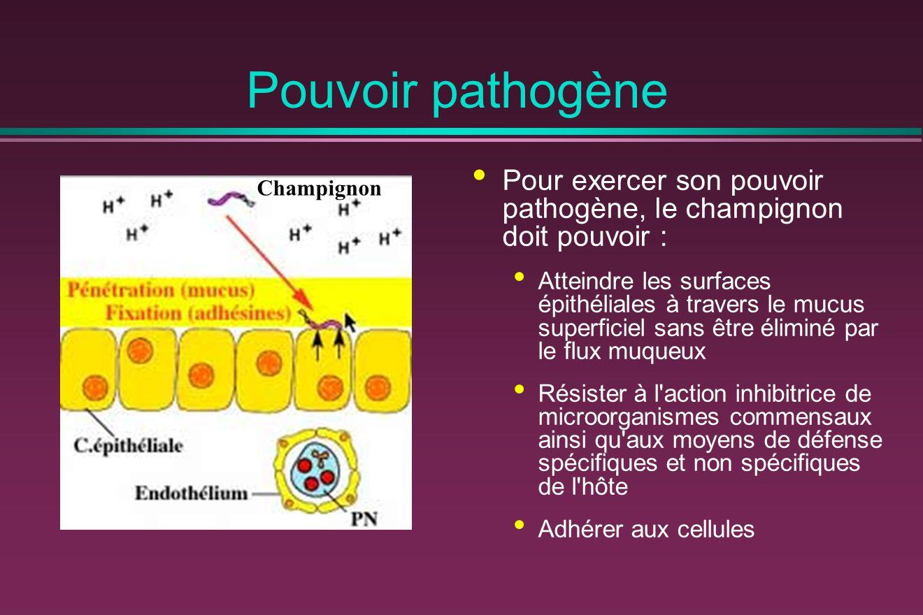 Pouvoir pathogène Pour exercer son pouvoir pathogène, le champignon doit pouvoir :