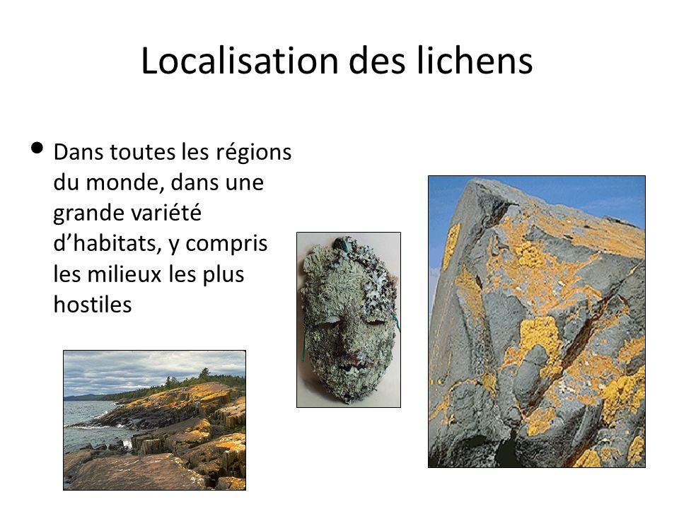 Localisation des lichens