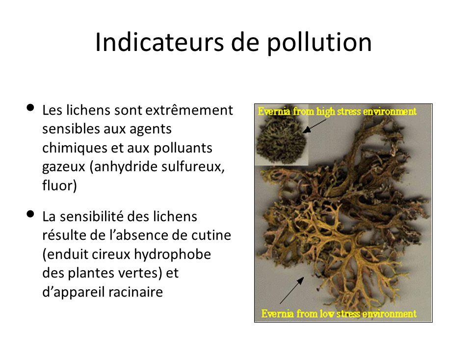 Indicateurs de pollution