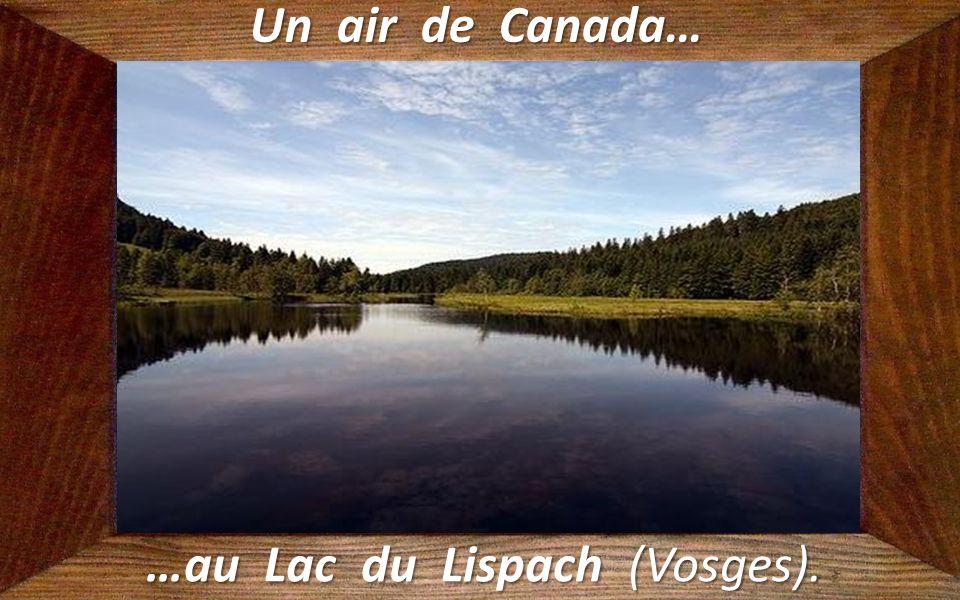 …au Lac du Lispach (Vosges).