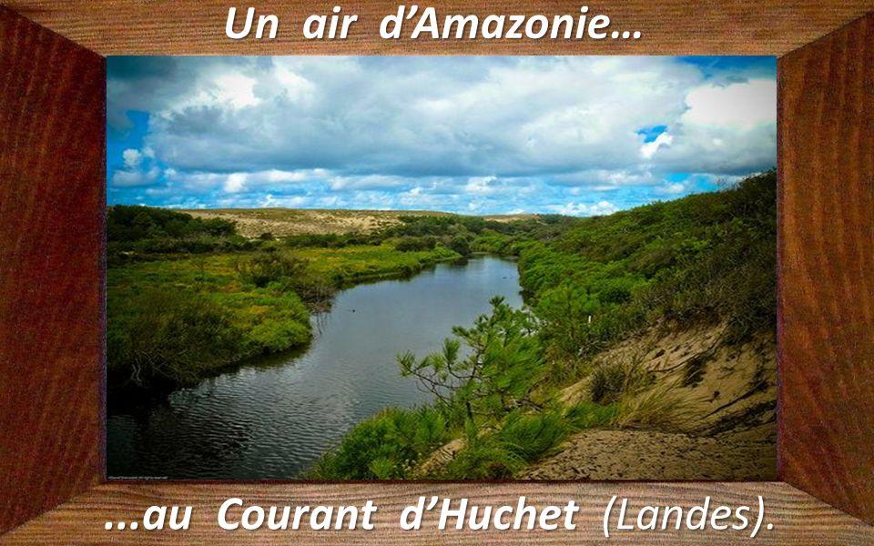 ...au Courant d'Huchet (Landes).