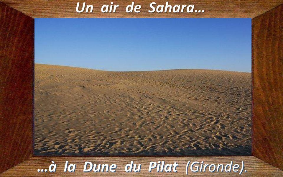 …à la Dune du Pilat (Gironde).