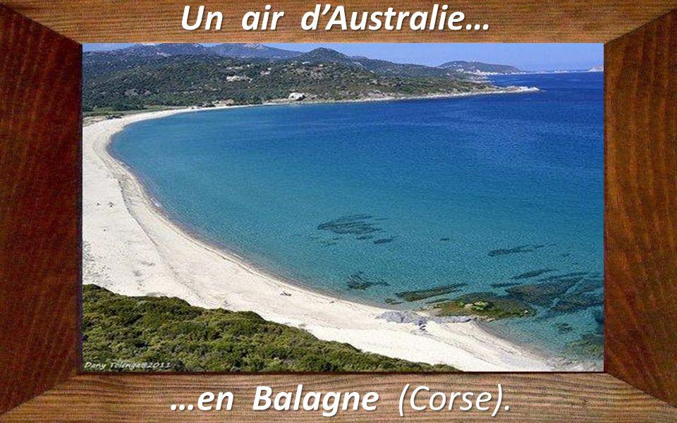 Un air d'Australie… …en Balagne (Corse).