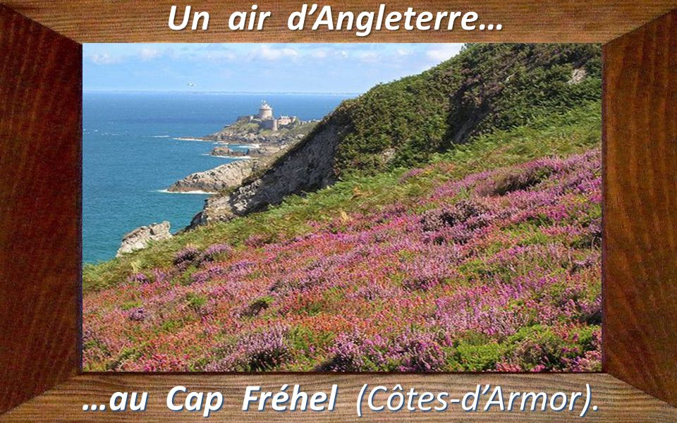…au Cap Fréhel (Côtes-d'Armor).