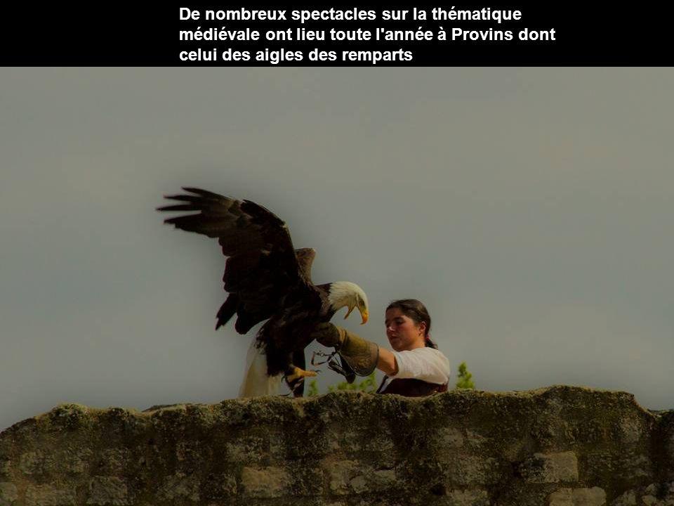 De nombreux spectacles sur la thématique médiévale ont lieu toute l année à Provins dont celui des aigles des remparts