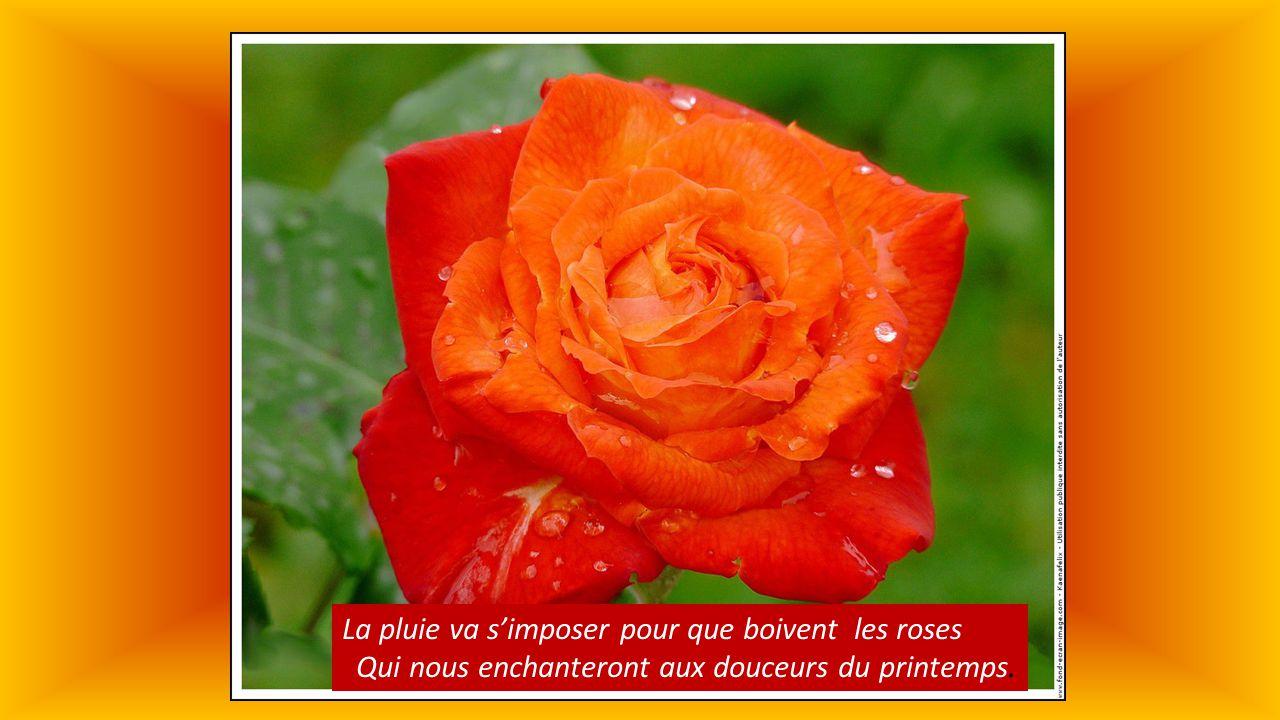 La pluie va s'imposer pour que boivent les roses