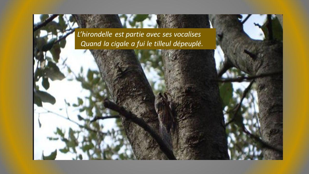 L'hirondelle est partie avec ses vocalises