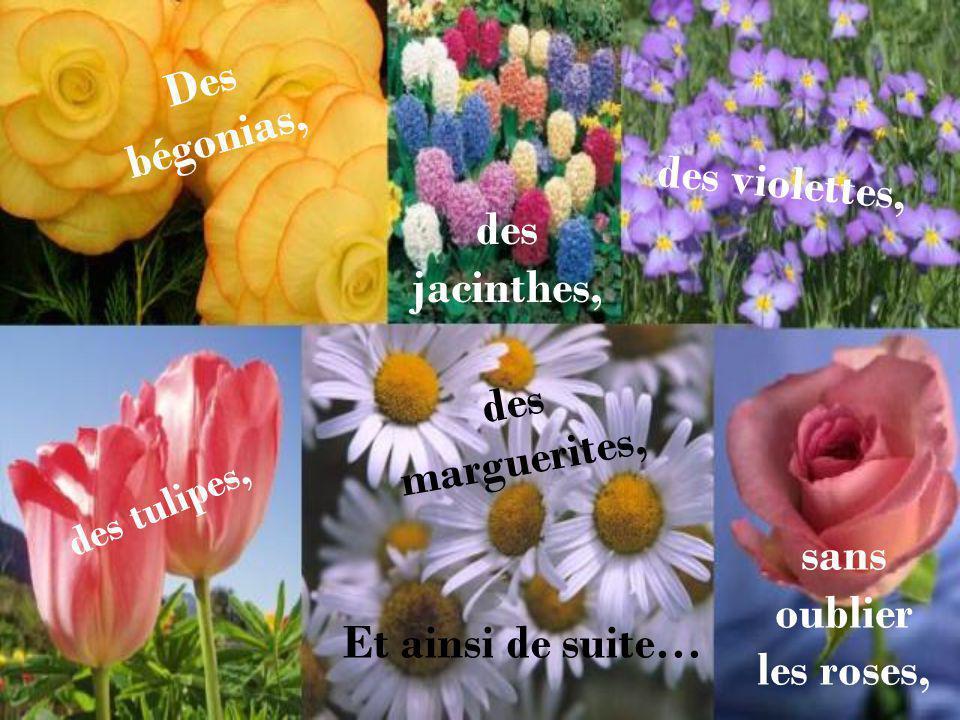 Des bégonias, des violettes, des jacinthes, des marguerites,
