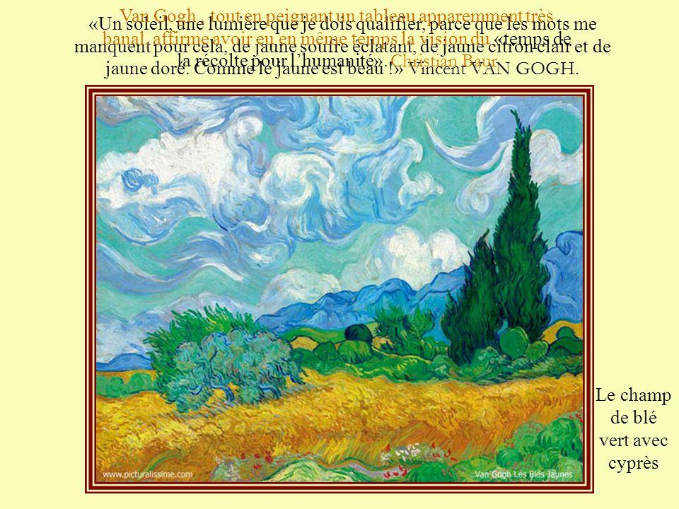 Le champ de blé vert avec cyprès