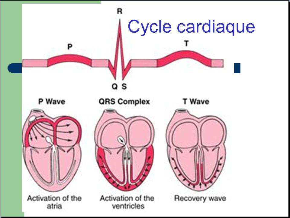 Cycle cardiaque ECG normal