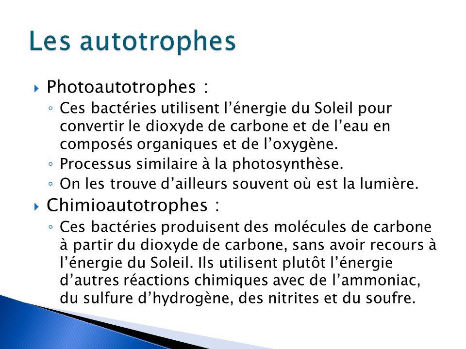 Les autotrophes Photoautotrophes : Chimioautotrophes :