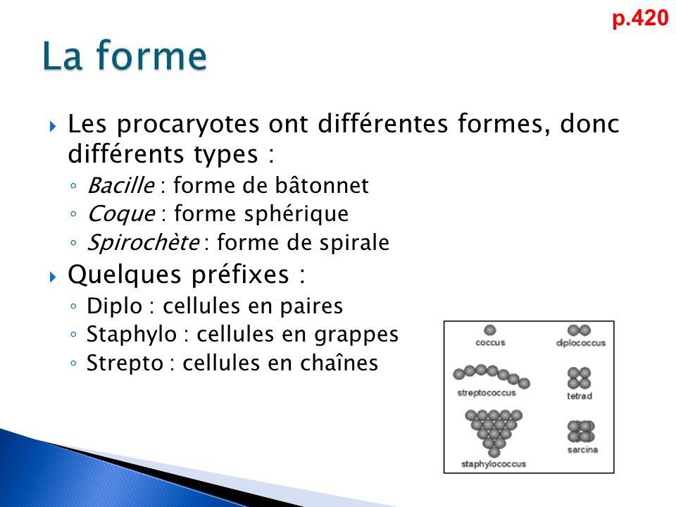 p.420 La forme. Les procaryotes ont différentes formes, donc différents types : Bacille : forme de bâtonnet.