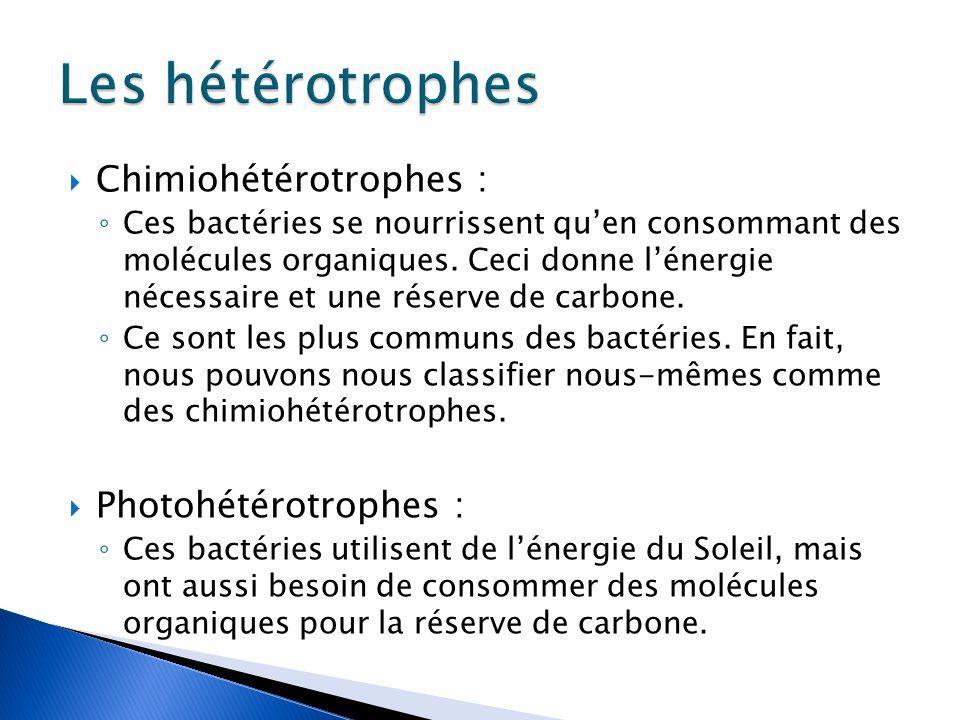 Les hétérotrophes Chimiohétérotrophes : Photohétérotrophes :