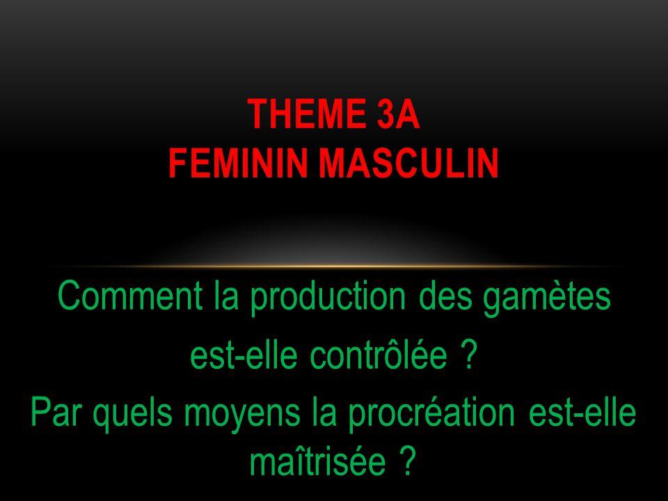THEME 3A FEMININ MASCULIN