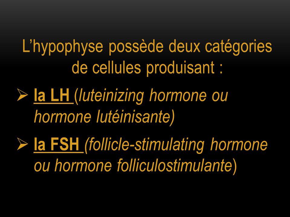 L'hypophyse possède deux catégories de cellules produisant :