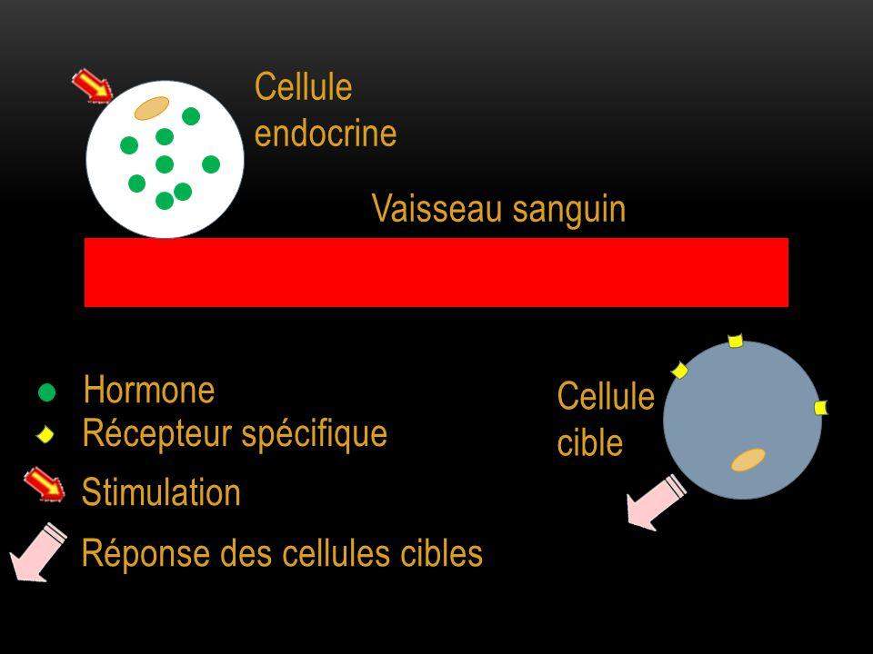 Cellule endocrine Vaisseau sanguin. Hormone. Cellule cible. Récepteur spécifique. Stimulation.