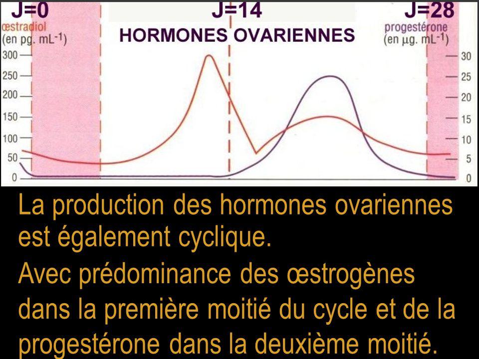 La production des hormones ovariennes est également cyclique.