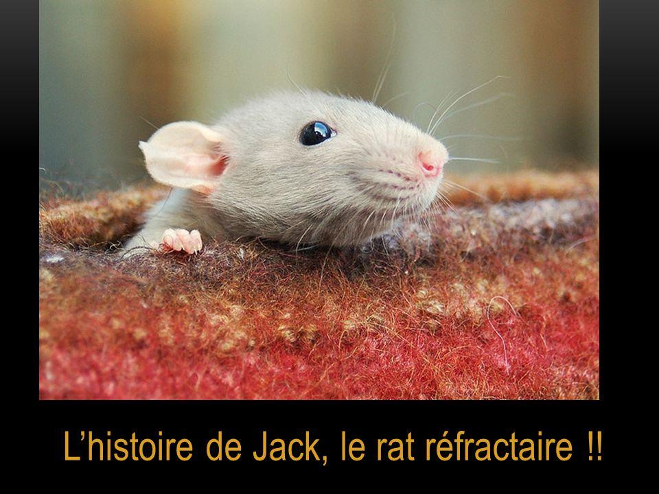 L'histoire de Jack, le rat réfractaire !!