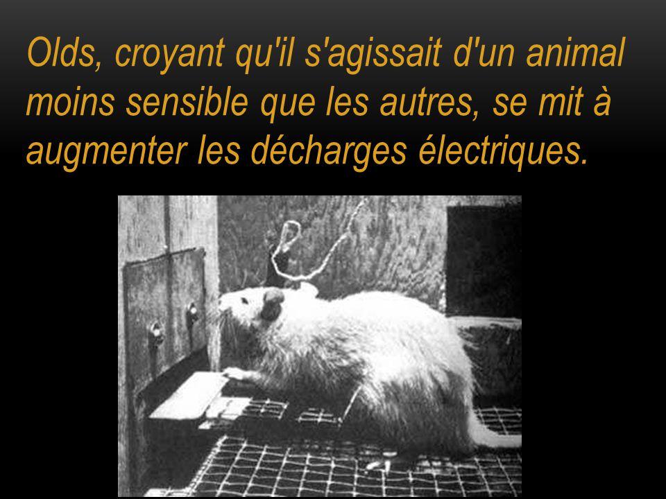 Olds, croyant qu il s agissait d un animal moins sensible que les autres, se mit à augmenter les décharges électriques.