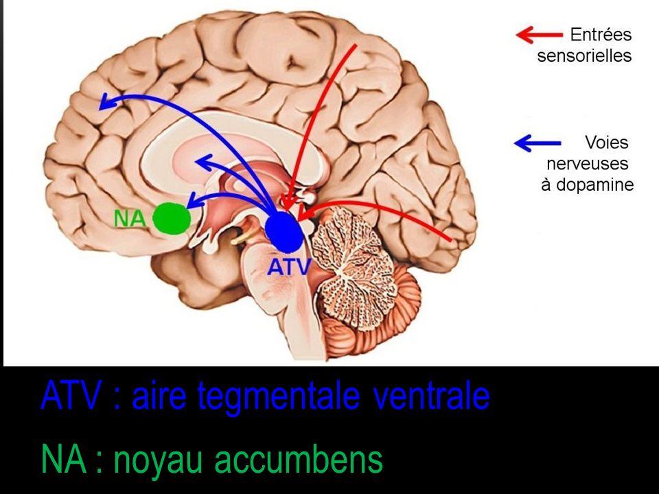 ATV : aire tegmentale ventrale