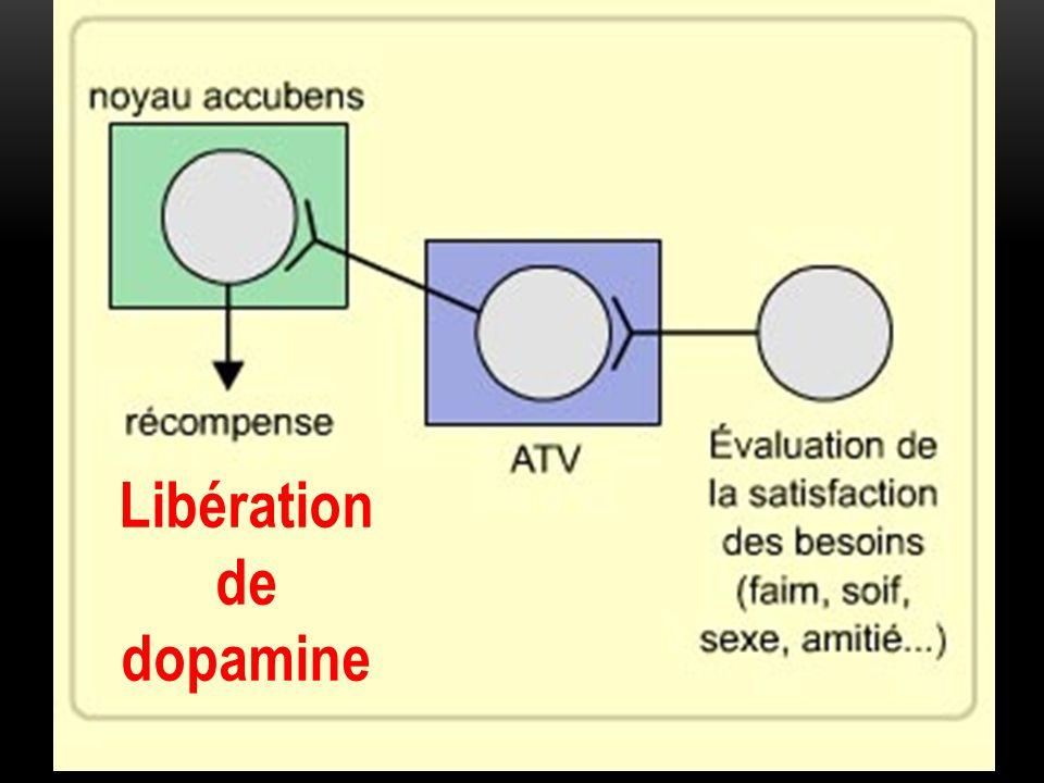 Libération de dopamine