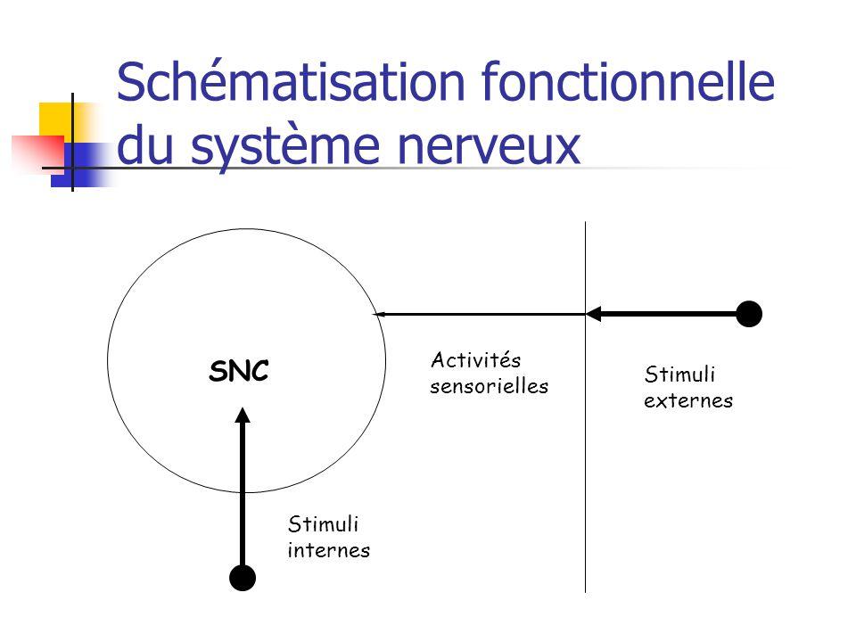 Schématisation fonctionnelle du système nerveux