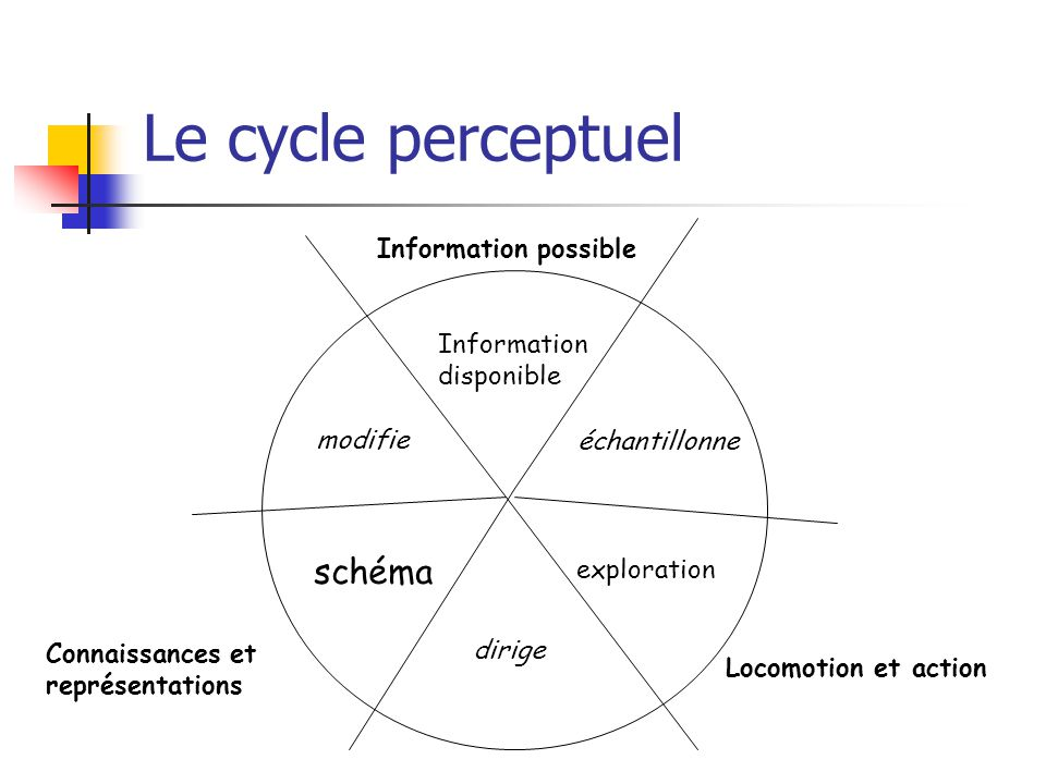 Le cycle perceptuel schéma Information possible Information disponible
