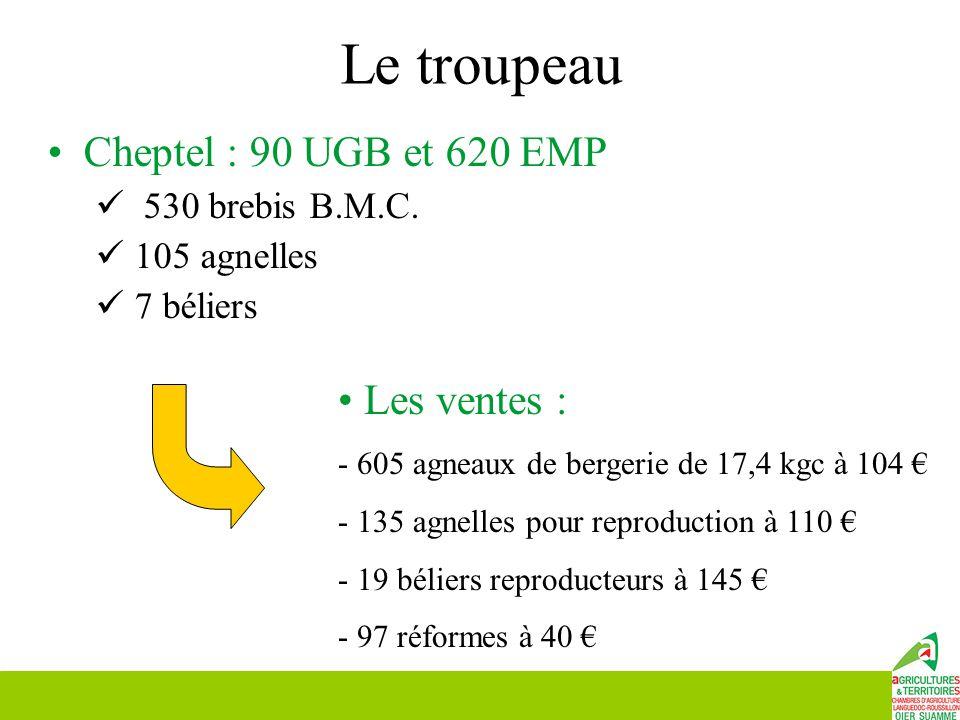 Le troupeau Cheptel : 90 UGB et 620 EMP Les ventes : 530 brebis B.M.C.