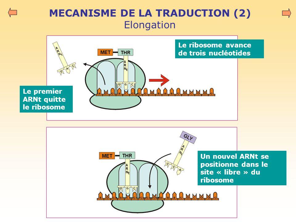 MECANISME DE LA TRADUCTION (2) Elongation