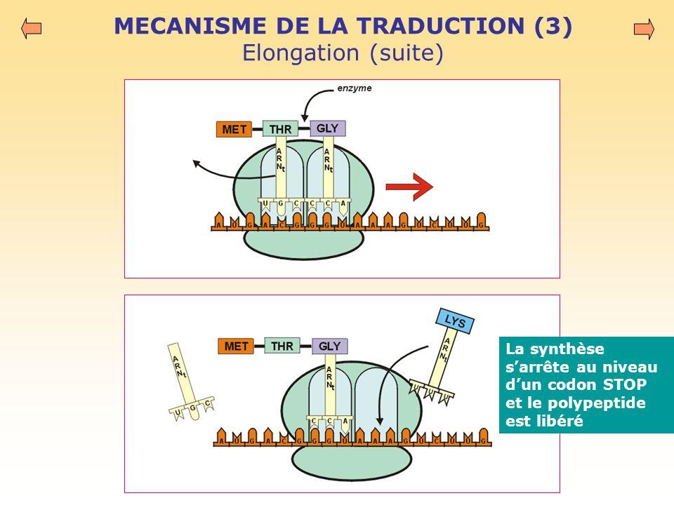 MECANISME DE LA TRADUCTION (3) Elongation (suite)