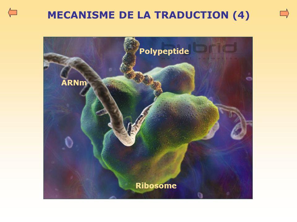 MECANISME DE LA TRADUCTION (4)