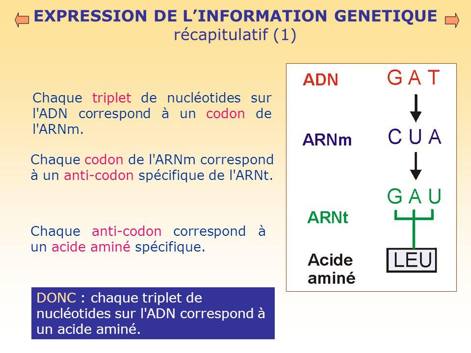 EXPRESSION DE L'INFORMATION GENETIQUE récapitulatif (1)
