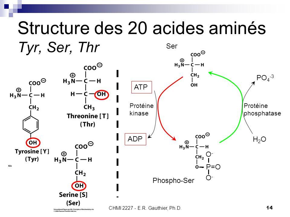 Structure des 20 acides aminés Tyr, Ser, Thr
